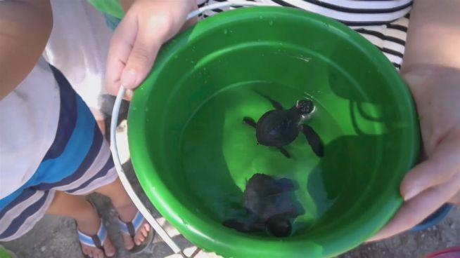 Tierbabys in Gefahr: Die Schildkröten-Retter