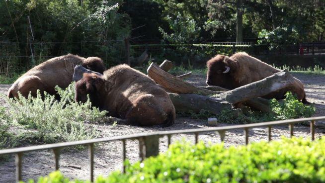 Schwierige Umsiedlung: Zoo von Buenos Aires wird modern