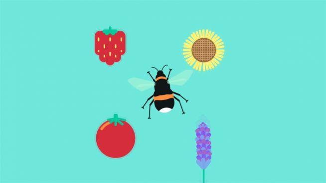 Das Massensterben der Bienen: Drohnen als Ersatz?